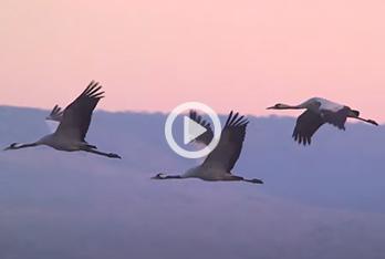 Winner of 2018 AEWA Waterbird Conservation Award
