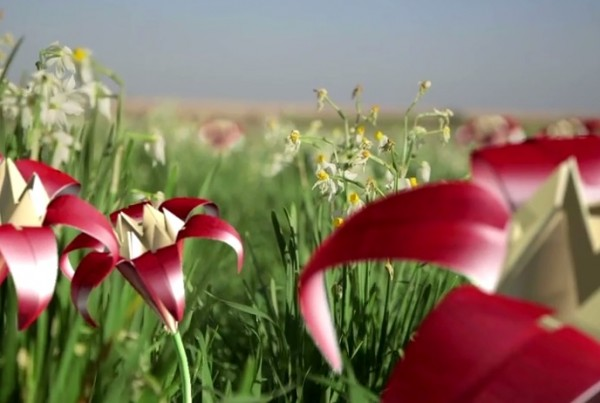 Preserving Israel's Wild Flowers